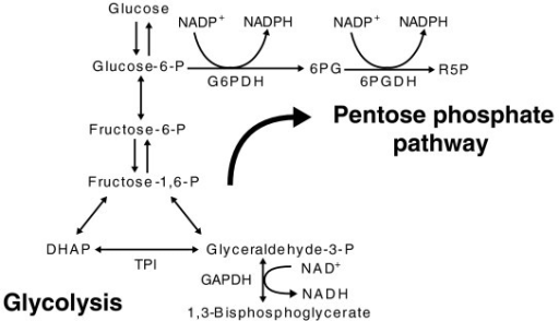 A simplified diagram of the link between glycolysis and open i a simplified diagram of the link between glycolysis and the pentose phosphate pathway the pentose ccuart Gallery