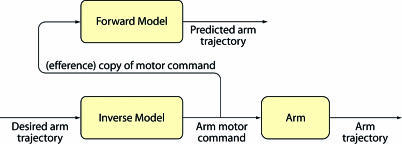 Internal Models in the Control of MovementThe brain is hypothesized to use forward models and inverse models to control movement. Both models are subject to change based on errors that are computed by comparing predicted and actual trajectories. (Flowchart adapted from Kawato [1999].)