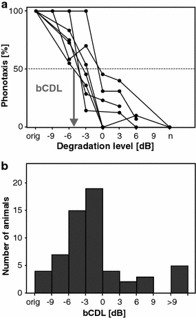 Robustness of signal recognition measured in behavioral tests with degraded female songs. a Phonotaxis responses of seven male grasshoppers. Abscissa: degradation levels in dB; 'n' indicates pure noise. Ordinate: the percentage of phonotactic turning responses; 100% means that the male reacted to every stimulus presentation. Behavioral critical degradation levels (bCDL) were determined at the intersection of each curve with the 50% response level (see arrow). b bCDL of 59 animals