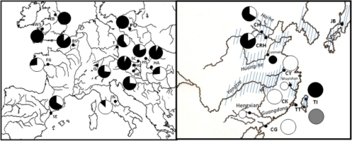 Distribution of Pseudorasbora parva samples sites in Europe (left) and in Asia (right), showing the species' native range.Pie charts represent the geographical distribution of major mtDNA lineages (see Figure 4). Lineage 1 = white, Lineage 2 = black, lineage 3 = grey. See Table 1 for population codes. Large pie charts represent samples collected in this study,small pie charts samples from Liu et al. 2010.