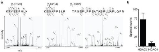 Phosphorylated chromatin regulators in CTLs: class II histone deacetylase 7 (HDAC7). (a)De novo synthesis of the acquired pseudo MS3 spectra in one of the four experiments performed for the three peptides KTVpSEPNLK, KEpSAPPSLR and pTRSEPLPPSATASPLLAPLQPR. * in y and b ion series indicates loss of phosphate. (b) Spectral counting of the two detected class IIa HDACs in CTLs, HDAC7 and HDAC4 separately calculated for phosphopeptide enrichment and 14-3-3 affinity purification screens. Graph represents the averaged spectral counts of the four SILAC experiments ± SEM.