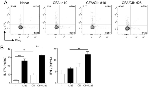 IL-23 does not enhance CII-specific IL-17A production.(A) DBA/1 mice were immunized with CFA only, with CII/CFA or left untreated. At days 10 (CFA and CFA/CII) and 25 (CFA/CII) post-immunization, splenocytes were isolated and assessed for intracellular expression of IL-17A and IFN-γ. Numbers in quadrant indicate percentage positive cells in that quadrant. Plots are representative of n = 3–6 per group. (B) IL-17A and IFN-γ secretion levels after antigen (CII) specific restimulation of purified splenic CD4+ T cells with irradiated APCs in the absence (−) or presence of exogenous IL-23. Data are the mean +SEM from n = 3 mice per group and *P<0.05; **P<0.01; ***P<0.001 as calculated by Mann-Whitney U test.