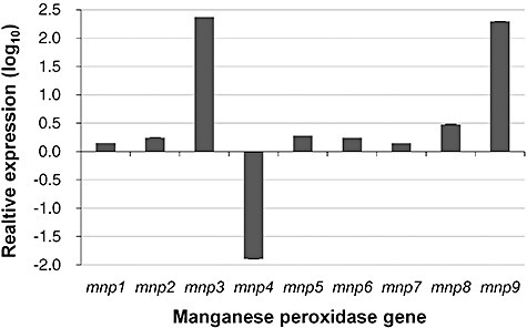 Relative transcript abundance of P. ostreatus PC9 MnP gene family members in RNA extracted from a 7‐day‐old liquid culture in GP medium amended with 27 µM Mn2+ (+Mn treatment), relative to that measured in a non‐amended medium (−Mn treatment), which served as the calibrator treatment. The expression of mnp1–9 gene transcript abundance, relative to β‐tubulin transcript abundance (endogenous control), was measured by real‐time PCR relative quantification analysis using the ΔΔCT method. Data represent the average of three biological replicates. Bars denote the standard deviation; when not visible, the standard deviation is included within the graph line width. Note the log10 scale.