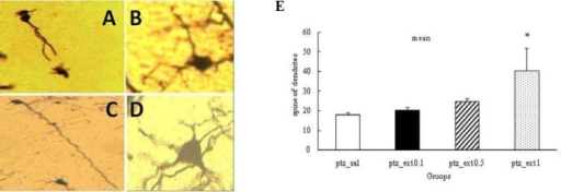 Effect of different doses of Boswellia extract on the number of dendritic spines in CA1 region in the kindled rats. *P<0.05. A; pentylenetetrazol-saline, B; pentylenetetrazol-extract 0.1 g/kg, C; pentylenetetrazol-extract 0.5 g/kg, D; pentylenetetrazol-extract 1 g/kg (magnification 100X)