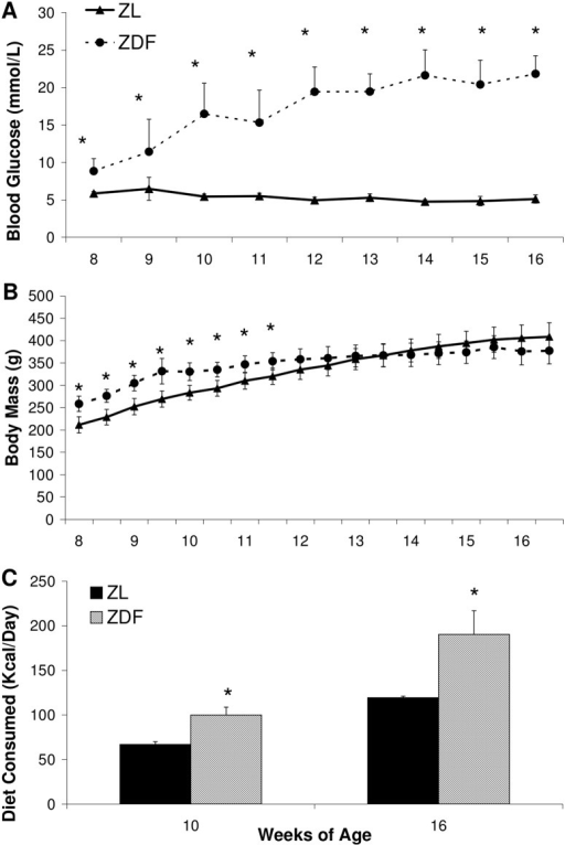 Animal model characteristics of ZDF and ZL animals.Blood glucose (A), body mass (B), and diet consumed (C). Data are mean ± SD. n = 7–10 per group. *p<0.05 vs ZL, Students t-test.