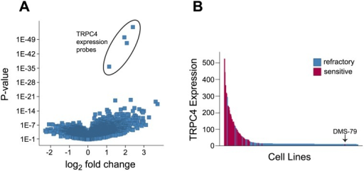 Sensitivity to englerin A induced growth inhibition correlates with expression of TRPC4.(A) Volcano plot of gene expression features. X- axis indicates fold change of feature in sensitive versus refractory cell lines and Y-axis indicates statistical significance. (B) Waterfall plot showing TRPC4 expression levels (affymetrix microarray units) in englerin A sensitive (red) and refractory (blue) tumor cell lines.