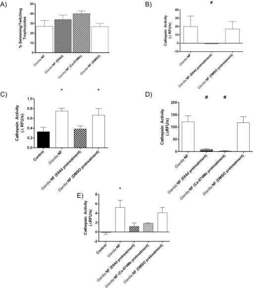 Pre-treatment of Giardia duodenalis trophozoites with E-64d or Ca-074Me inhibits cathepsin cysteine protease activity.G. duodenalis NF trophozoites were treated with E-64d (10uM), Ca074Me (10uM), or vehicle control (DMSO) for 3 hours and then co-incubated with Caco-2 monolayers for 2 (B and C) or 24 (D and E) hours. G. duodenalis trophozoites were collected and sonicated to assess for intra-trophozoite cathepsin cysteine protease activity. Supernatants were collected and assessed for the viability of G. duodenalis trophozoites by examining the ratio of motile: non-motile trophozoites (A). G. duodenalis sonicates were incubated with catB/L fluorogenic substrate ZFR-AMC (B and D) or the catB fluorogenic substrate ZRR-AMC (C and E) (200 μM: 5 min: 37°C: pH 7.2). Proteolytic activity was calculated by determining the change in RFUs over time. *p<0.05 vs Control cells; #p<0.05 vs G. duodenalis NF trophozoites. Data are mean +/- SEM, n = 3.