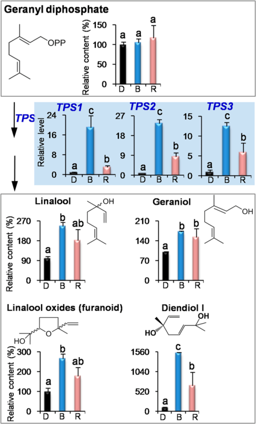 Effects of blue light and red light on the pathway leading from geranyl diphosphate to volatile terpenes in preharvest tea leaves.D, dark treatment. B, blue light treatment. R, red light treatment. TPS, terpene synthases. All treatments on preharvest tea leaves were carried out for 3 days. The relative content (%) of metabolites was calculated based on the dark treatment (100%) as a control. The relative level of genes was calculated based on the dark treatment (1) as a control. Different means with different letters are significantly different from each other (p ≤ 0.05).