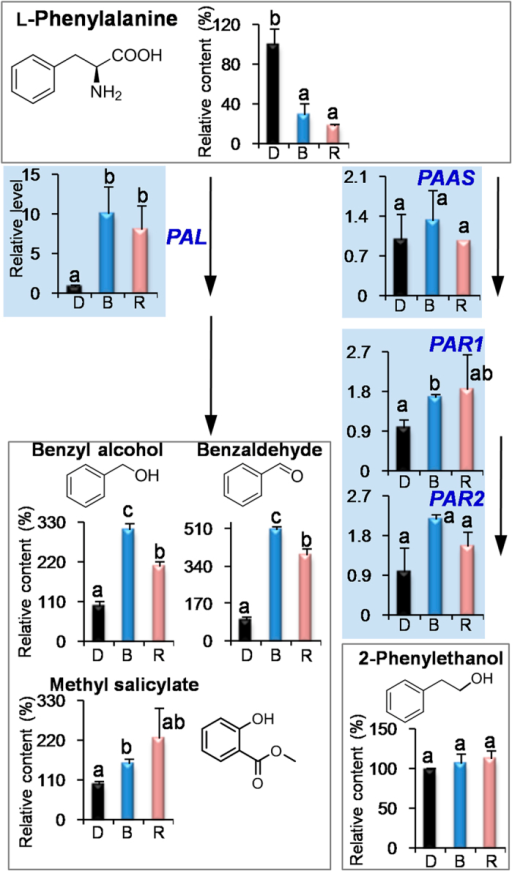 Effects of blue light and red light on the pathway leading from l-phenylalanine to volatile phenylpropanoids/benzenoids in preharvest tea leaves.D, dark treatment. B, blue light treatment. R, red light treatment. PAL, phenylalanine ammonialyase. PAAS, phenylacetaldehyde synthase. PAR, phenylacetaldehyde reductases. All treatments on preharvest tea leaves were carried out for 3 days. The relative content (%) of metabolites was calculated based on the dark treatment (100%) as a control. The relative level of genes was calculated based on the dark treatment (1) as a control. Different means with different letters are significantly different from each other (p ≤ 0.05).