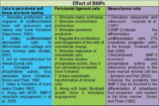 Effects of bone morphogenetic proteins