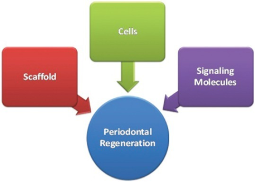 Factors required for periodontal regeneration