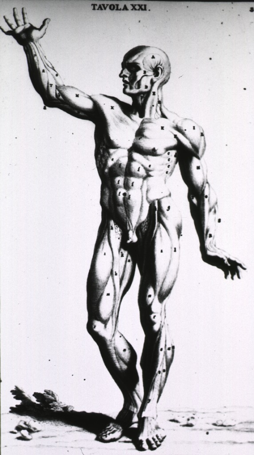 <p>Full length view of a male figure; right arm raised, head in left profile; musculature defined.</p>