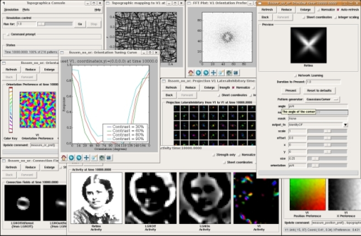 "Topographica software screenshot. This image shows a sample session from Topographica version 0.9.3, available freely at topographica.org. Here the user is studying the behavior of an orientation map in the primary visual cortex (V1), using a model of photoreceptors as the input to the Retina, ON and OFF RGC/LGN cells, and a simple V1 model. The window at the left labeled ""Orientation Preference"" shows a self-organized orientation map in V1. The window labeled ""Activity"" shows (from left to right) a sample visual image input to the retina, the ON and OFF channel responses to that input, and (on the right) an orientation-color-coded representation of activity in the V1 Sheet of neurons. The input patterns were generated using the Test Pattern ""Preview"" dialog at the right. The window labeled ""Connection Fields"" shows the strengths of the connections to one neuron in V1. The lateral weights for a 9 × 9 sampling of the V1 neurons are shown in the ""Weights Array"" window in the center; neurons tend to connect to their immediate neighbors and to distant neurons of the same orientation. The ""Topographic Mapping"" window shows how retinotopy has been distorted by the orientation map, and the ""FFT Plot"" shows that the orientation map repeats regularly in all dimensions, as in animals. This type of large-scale analysis is difficult with other simulators, but typically requires no new coding or software development once a network simulation has a basic connection to Topographica."