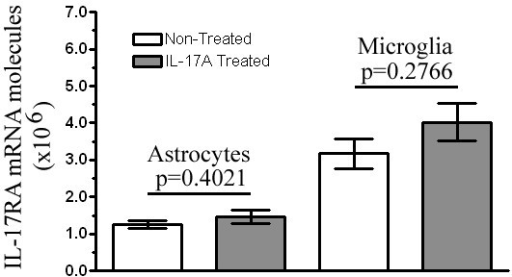 Exogenous treatment of IL-17A does not alter IL-17RA expression in glial culture. mRNA was isolated from either non-treated resting culture or IL-17A (10 ng/ml) treated culture supernatants at 12 hr in vitro. IL-17RA gene expression was measured by RT-PCR using a primer set from exon boundary 1–2. Data represent the mean expression from three different non- treated and IL-17A- treated culture batches ± SEM. IL-17A treatment did not alter IL-17RA expression in neonatal glial cells (*p > 0.05).