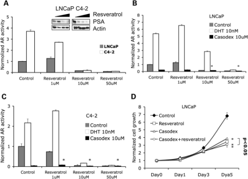 Resveratrol inhibits AR transcriptional activity. (A) LNCaP and C4-2 cells were co-transfected with plasmids expressing hARE-Luc and Renilla-Luc and treated with DMSO (control) and different concentrations of resveratrol for 48 h before lysis of cells for luciferase assay. Data represent mean luciferase firefly luminescence + SD (n = 3) normalized to Renilla-luminescence. Right panel shows western blots demonstrating increasing concentrations of resveratrol associated with decreasing PSA expression in LNCaP cells. Parenthetically, at the 1 µm concentration, resveratrol may have slightly increased AR transcriptional activity and PSA expression in LNCaP cells. (B) LNCaP and (C) C4-2 cells were transfected with plasmids expressing hARE-Luc and Renilla-Luc and treated as indicated. AR activity was then measured by luciferase assay (*P < 0.005). (D) LNCaP cells were treated with DMSO (control) or different concentrations of resveratrol. Growth rate of the cells was assessed by the MTT assay over a period of 5 days. Note that resveratrol and Casodex induced cell growth inhibition and the two-drug combination had the same effect as resveratrol by itself (*P < 0.01).