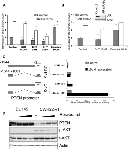 Resveratrol-induced PTEN promoter activity is mediated by AR. (A) C4-2 cells were co-transfected with plasmids expressing PTEN-Luc/Renilla-Luc and treated as indicated for 48 h. PTEN promoter activity was measured by dual luciferase assay. AR-ligand DHT inhibited PTEN promoter activity in a dose-dependent manner and resveratrol stimulated PTEN promoter activity. In contrast, AR-antagonist Casodex was shown to stimulate PTEN promoter activity, with resveratrol only adding slightly to this effect (*P < 0.005). (B) Knockdown of AR results in increased PTEN promoter activity. C4-2 cells were co-transfected with control siRNA or anti-AR siRNA and PTEN-luc/Renilla-Luc plasmids. After 48 h of treatment, PTEN promoter activity was measured by luciferase assay. The insert shows the knockdown of AR protein expression (*P < 0.005). (C) DU145 and C4-2 cells were transfected with PTEN-Luc/Renilla-Luc plasmids. Cells were treated with DMSO, or 10 µm resveratrol for 48 h. PTEN promoter activity was measured by luciferase assay. The structures of the −1134 to −1 and truncated −1134 to −1001 PTEN promoters are shown on the left panel. (D) AR-negative DU145 and AR-positive CWR22rv1 cells were treated with DMSO, 10, 20 or 50 µm resveratrol for 48 h. Western blots show PTEN, phospho-AKT, total-AKT and Actin levels. The quantification of phospho-AKT is shown in Supplementary Material, Fig. S3. Note that resveratrol did not change PTEN levels in DU145 cells.