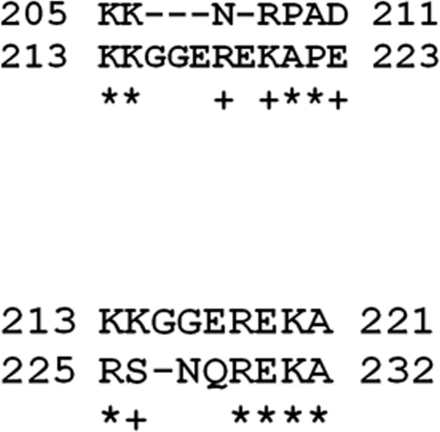 Examples of contiguous repeats found in the aa sequence of KUW2010/02 VP6.Evidence was detected for repeated contiguous aa sequences in VP6 of KUW2010/02. The aa positions, as indicated, are between residues 205 to 232. The region 213 to 223 is shown as the target sequence, with matching repeats 205–211 (upstream) and 225–232 (downstream), shown in the upper and lower lines respectively. + similar residue: * identical residue.