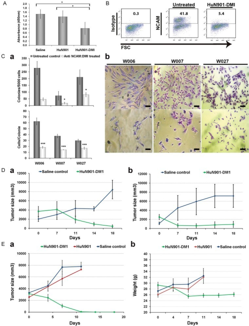 Specific targeting of NCAM+ WT cells with lorvotuzumab-mertansine induces in vivo eradication of WT xenograftsAnti NCAM specific effect of lorvotuzumab-mertansine on WT cell survival and stemness properties.Cells derived from three different WT Xn (W016, W027 and W028) were exposed to the immunoconjugate, unconjugated huN901 antibody or saline. Cell survival was significantly reduced in the lorvotuzumab-mertansine treated compared with HuN901 or saline treated controls. Cell survival was measured using an MTS assay. Data is presented as mean ± SEM of triplicate experiments from the three different WT Xn sources. *p = 0.03 from saline and p = 0.034 from unconjugated HuN901 controls.FACS analysis for NCAM expression in cultured W011 WT Xn-derived cells either treated with 0.18 µM lorvotuzumab-mertansine or with saline for 5 days. NCAM expressing cells were preferentially eliminated from the W011 cell population exposed to lorvotuzumab mertansin.Colony forming ability (CFU) was compared between primary WT cells from three different patients (W006, W007, W027) either treated with 0.18µM lorvotuzumab-mertansine or untreated control for 5 days. (a – upper panel) Number of colonies formed by lorvotuzumab-mertansine treated cells was significantly lower than that of untreated cells (*p = 0.08, 0.02, 0.04, respectively). (a – lower panel) The number of cells per colony was significantly lower in Ab treated compared to untreated cells. Data is presented as mean ± SEM of at least two experiments performed in triplicates. (*p = 3E−06, 4E−06, 0.0002, respectively). (b) Representative phase-contrast images of colonies formed from treated and untreated WT cells from three patients (Scale bars = 100 µm). In vivo activity of huN901-DM1 in tumour xenograft models of human WT.Mice were treated intravenously with either (1) normal saline; (2) lorvotuzumab-mertansine (360 µg DM1/kg or 18 mg conjugate/kg). Tumour volume was assessed in three dimensions using an electronic caliper once-twice a week (using the formula V = L × W × H), and the volume is presented in mm3. (a) Mice bearing palpable xenografts (W011 Xn, W013 Xn and W014 Xn) that contained high NCAM levels (HNWT) and were treated with saline (n = 6), showed exponential tumour growth, while those treated with lorvotuzumab-mertansine (n = 10) demonstrated complete or near complete tumour eradication 3 weeks after the initial treatment was administered (p = 0.03). (b) Mice bearing LNWT treated with saline (n = 3) showed similar results, while treatment with lorvotuzumab-mertansine (n = 4), showed significant initial reduction in tumour volume (>50%) followed by a plateau (p = 0.03).(a) Mice bearing palpable tumours were randomized into three treatment groups: (1) Lorvotuzumab-mertansine (360 µg DM1/kg; n = 15); (2) unconjugated Ab (HuN901-13.3 µg/kg; n = 12); (3) saline as a control (n = 11). Tumours treated with Lorvotuzumab-mertansine were completely eradicated following 3 weeks of treatment while tumours treated with either unconjugated Ab or saline showed rapid tumour growth (p-values are 1.29E−07 and 5.75E−08, respectively). (b) Mouse weights during treatment.
