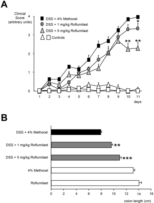 Effect of roflumilast on clinical score and colon length. A. Mitigation of DSS-induced colitis by roflumilast.Mice were exposed to 3.5% DSS in drinking water for 11 days. Either 1 mg/kg/d roflumilast, 5 mg/kg/d roflumilast or 4% methocel were administered orally once daily for 11 days (n = 8). Non-DSS-treated mice received 5 mg/kg/d roflumilast (n = 8) or 4% methocel (n = 5). The degree of colitis was quantified by the clinical score assessing weight loss, stool consistency and rectal bleeding (range from 0 =  healthy to 4 =  maximal disease activity). Scores are depicted as mean ± SEM; *p<0.05, **p<0.01 versus DSS+methocel. B. Effect of roflumilast on colon length shortening in DSS-induced colitis. Mice were exposed to 3.5% DSS in drinking water for an 11 day period. Roflumilast treatment (either 1 mg/kg/d or 5 mg/kg/d orally, once daily for eleven days) or 4% methocel were started on the same day as DSS administration (n = 8). Non-DSS mice received 5 mg/kg/d roflumilast (n = 8) or 4% methocel (n = 5). Values are depicted as mean ± SEM. **p<0.01, ***p<0.001 versus DSS+methocel.