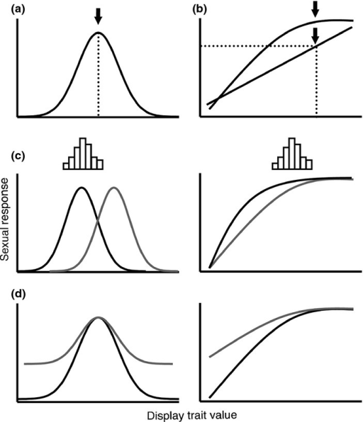 Preference functions relate variation in sexual response to variation in display traits. (a) Closed preference functions rise to peak response at the preferred display trait value ('peak preference'; arrow) and then decline. (b) Open preference functions continue to rise or level off, although a peak may be defined (arrows) if further display investment brings diminishing returns. (c) In relation to display trait distributions (histograms), preference functions make predictions about the form of selection (see text). Here, black vs. grey functions predict stabilising vs. directional selection (closed preferences) or varying directional selection (open preferences). Note that a closed preference may predict stabilising or directional selection according to the position of the display trait distribution relative to peak preference. (d) Preference functions may vary in strength (grey is weaker), according to the extent of the decrease in attractiveness as displays deviate from peak preference.