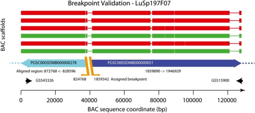 Assembled BAC sequence for LuSP197F07. Each scaffold assembly is derived from PE sequences of a combined pool of 82 DM BACs (spanning scaffolding gaps on chromosome 4) and single end sequence at greater read depth from one of the six subpools derived from the same BACs. The assemblies show a direct sequence running from PGSC0003DMB000000278 (− orientation, full length, cyan) through into PGSC0003DMB000000051 (+ orientation, blue) in accordance with the AGP and fully validating the decision to split PGSC00003DMB0000000278 at position 824768 and to split PGSC0003DMB000000051 at position 1859342 as indicated in the AGP file. Regions of good alignment (>98% identity, >1000 bases) are indicated as thick lines. Thin lines indicate no good alignment between the superscaffold and BAC sequences. The BAC end sequences are labeled with their Genbank IDs and are indicated at each end of the plot by black arrows. Breakpoints in the BAC sequences are indicated by orange diagonal lines and annotated with the assigned breakpoints coordinate from the AGP.