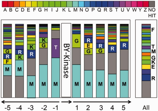 Distribution and functional classification of genes surrounding the BY-kinases. For each of the five neighboring genes (located upstream and downstream of the BY-kinase), the functional COG category was determined. For each surrounded position, the bar indicates the frequency of each functional gene type (represented here by COG category) among the overall categories of the same position. Bar in the right part represents the COG distribution in all genomes harboring BY-kinases. COG categories are shown in different colors (see the COG color legend) and are associated with the corresponding capital letters: A, RNA processing and modification; B, chromatin structure and dynamics; C, energy production and conversion; D, cell cycle control, cell division, and chromosome partitioning; E, amino acid transport and metabolism; F, nucleotide transport and metabolism; G, carbohydrate transport and metabolism; H, coenzyme transport and metabolism; I, lipid transport and metabolism; J, translation, ribosomal structure, and biogenesis; K, transcription; L, replication, recombination, and repair; M, cell wall/membrane/envelope biogenesis; N, cell motility; O, posttranslational modification; protein turnover, chaperones; P, inorganic ion transport and metabolism; Q, secondary metabolites biosynthesis, transport, and catabolism; R, general function prediction only; S, function unknown; T, signal transduction mechanisms; U, intracellular trafficking, secretion, and vesicular transport; V, defense mechanisms; W, extracellular structures; Y, nuclear structure; Z, cytoskeleton.