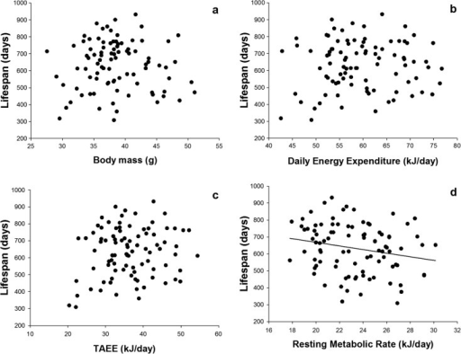 Lifespan correlations. Relationships between individual lifespan of 92 female MF1 mice and body mass (a) daily energy expenditure (DEE) (b), thermoregulatory activity energy expenditure (TAEE) (c) and resting metabolic rate (RMR) (d). Only the relationship in d was significant (see text for statistics)