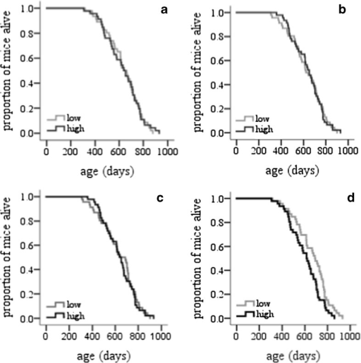 Survival curves. Cumulative survival curve (Kaplan–Meier survival plot) of female MF1 mice. The cumulative survival rate was plotted against age in days. Log-rank test was performed to compare high and low body mass (a), daily energy expenditure (b), thermoregulatory activity energy expenditure (c) and resting metabolic rate (d) (see text for statistics)
