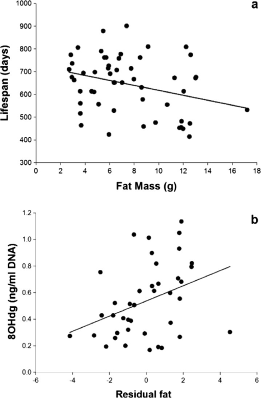 Effect of body fatness on lifespan and DNA damage. Negative and significant relationship between body fatness (g fat) and lifespan (days) (F = 5.32, P = .025, R2 = 0.1, n = 53) (a). Positive and significant relationship between DNA damage measured by 8-OHdG concentration and body fatness obtained from a regression between fat mass and body mass in grams (F = 5.6, P = 0.02, R2 = 0.13; n = 40) (b) (see text for details)