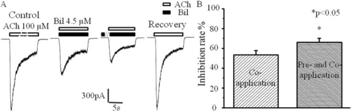 Enhanced inhibition of nAChRs by bilirubin pre-application.(A), representative nAChR current traces evoked by ACh alone (control), coapplied with bilirubin, bilirubin pre-application, and ACh alone (recovery), respectively. (B), graph showing the percentage of current inhibition when 100 μM ACh was coapplied with 4.5 μM bilirubin with or without 4.5 μM bilirubin preapplication. All data points are expressed as mean ± SEMs (n = 6).