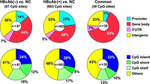 "Percentage of CpG sites according to their gene location (upper) and the CpG content in the genes (lower). ""Common"" indicates the 30 CpG sites, which were commonly hyper- or hypomethylated in both hepatitis B core antibody (HbcAb) (−) and HBcAb (+) liver tissues in comparison with normal control (NC) liver tissues."