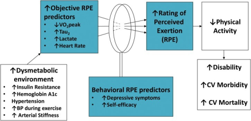 Conceptual model of perceived effort during exercise.