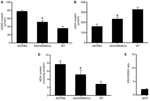 Human amniotic membrane-derived mesenchymal stem cells (hAMMSCs) reduced oxidative stress in Alzheimer's disease (AD) transgenic mice. The levels of (A) glutathione disulfide (GSSG), (B) glutathione (GSH), (C) the extent of lipid peroxidation malonaldehyde (MDA) and (D) the activity of antioxidant enzyme superoxide dismutase (SOD) were measured by assay kit spectrophotometrically. (E) The GSH/GSSG ratio was calculated. *P<0.05 vs. phosphate-buffered saline (PBS)-treated control group. WT, negative control group.