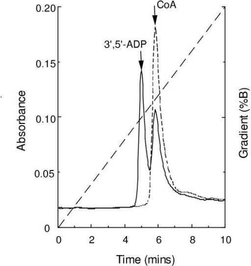 Identification of reaction products of CoA hydrolysis. Reaction mixtures containing 0.5 mM CoA were incubated at 37°C for 20 min with or without 0.1 μg Trx-Y87G2A.14 fusion protein and the products separated by HPLC as described in Materials and methods. Without enzyme (------), with enzyme (       ), gradient (— — — — —). Positions of authentic standards are indicated.