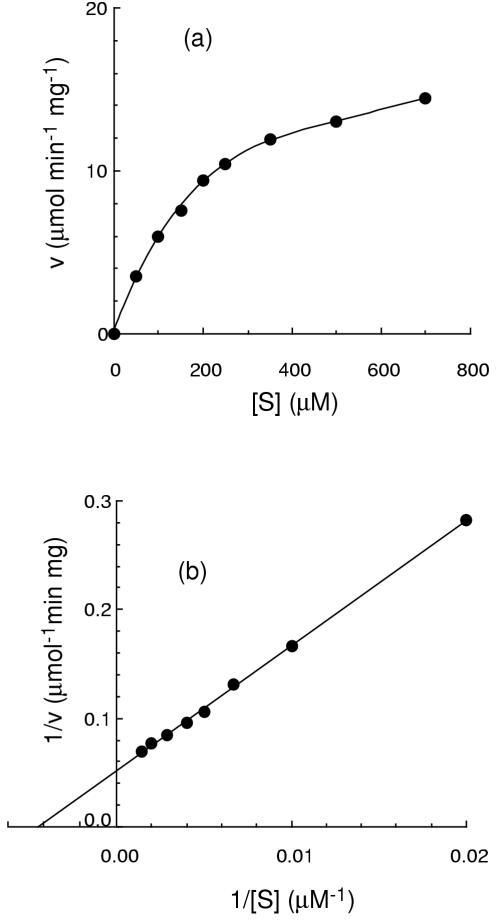 Lineweaver-Burk and Michaelis-Menten (inset) plots for the hydrolysis of CoA. Reaction mixtures containing various concentrations of CoA (0.05–0.7 mM) were incubated at 37°C for up to 20 min with 0.1 μg Trx-Y87G2A.14 fusion protein. Initial rates of hydrolysis were determined after separation of the products by HPLC as described in Materials and methods.
