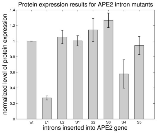 Protein expression results for the APE2 gene containing the newly designed mutant introns. Protein expression level is normalized with respect to wildtype expression level. Shaded boxes represent the mean value for several different samples and error bars represent +/- 1 standard deviation for these samples.