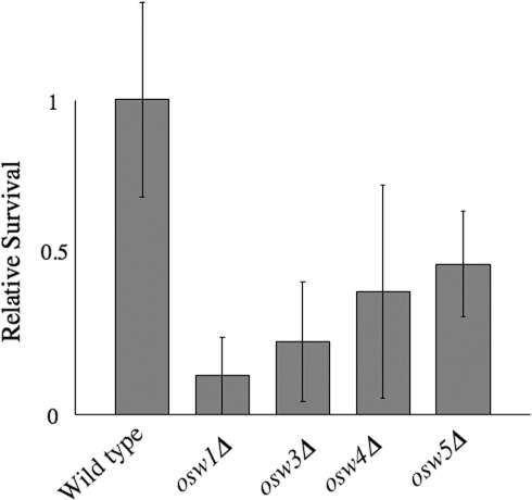osw mutant spores are sensitive to digestion by β-glucanases.AN120 (wild type) and the indicated osw mutant strains were sporulated and the survival of the spores assessed after exposure to Zymolyase. Percent survival for each strain was normalized to the average survival of the wild type strain. Data shown are the averages of at least four experiments. The vertical lines indicate one standard deviation.