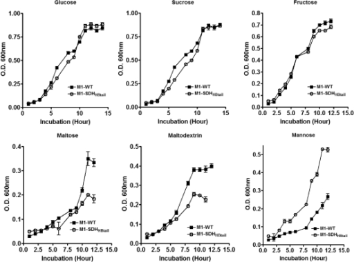Growth curves of the wild-type M1-SF370 (M1-WT) and its isogenic mutant (M1-SDHHBtail) GAS strains in chemically defined medium supplemented with glucose, sucrose, fructose, maltose, maltodextrin, and mannose. Error bars represent standard error of the mean OD600nm obtained from three independent experiments.