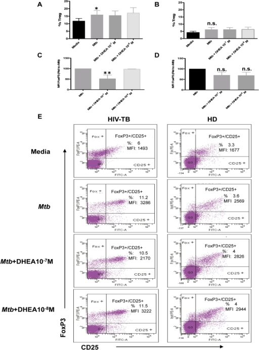 DHEA modulates the expression of the FoxP3 transcription factor in coinfected individuals. A and B.Percentages of Treg cells (defined as CD4+FoxP3+CD25+) in PBMC from A. HIV-TB and B. HD individuals stimulated with M. tuberculosis antigen in the presence or absence of DHEA at the indicated concentrations for 3 days. Bars indicate the mean ± SEM for each experimental condition. C and D. Relative FoxP3 Median florescence intensity (MFI) in Treg lymphocytes from C. HIV-TB patients and D. HD volunteers after culturing PBMC as detailed in A. Bars indicate the mean ± SEM for each treatment. Data are representative of four different experiments. *: p < 0.05; **: p < 0.01. E. Representative flow cytometry graphs depicting the results obtained from culturing PBMC from HIV-TB and HD individuals as indicated above.
