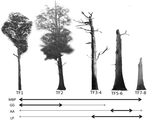 A subset of the decay stages of mountain ash trees used by arboreal marsupials (based on [33], [40].The dark arrows show the range of tree forms (TF1-8) preferred by each species, including the mountain brushtail possum (MBP), the greater glider (GG), the agile antechinus (AA) and the Leadbeater's possum (LP). The thinner grey arrows are tree forms used less frequently by each species. Although there is overlap between species in the preferred tree decay stages, the species differ in their specific requirements for hollow size. Mountain ash trees may take up to 150 years from germination to reach the TF1 stage, when suitable hollows for arboreal marsupials first begin to form. Tree form 9 is not shown and represents trees that have completely collapsed. Generally, younger trees (within the range shown) may hollows in the main stem and broken branches, while older trees have hollows in a highly decayed main stem.