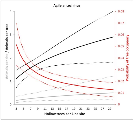 Model predictions for the agile antechinus of the number of animals per site (grey), the probability of occupancy per tree (red) and the number of animals per occupied tree (black) in relation to the number of hollow trees per 1 ha site.Dotted lines show 95% confidence intervals. Predictions were averaged over the non-represented variables (e.g. tree form).