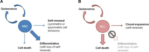 Models for regulation of self-renewal, proliferation and differentiation in normal haematopoietic stem cells and acute myeloid leukaemia as compared with acute lymphoblastic leukaemiaIn normal haematopoietic stem cells and AML, self-renewal is tightly regulated by a differentiation-dependent loss of self-renewal.In B-ALL, clonal expansion is tightly regulated by the dependence of positive survival and proliferation signals. Without those lymphoid blasts undergo apoptosis.