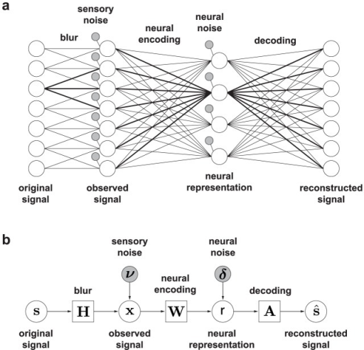 The sensory coding modela network diagram nodes rep open i the sensory coding modela network diagram nodes represent individual elements of ccuart Choice Image