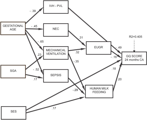 Results of path analysis, model 2.Significant effects of GA and SGA on neurodevelopment were identified: these were mediated by human milk feeding, complications and growth restriction at discharge. Specifically, SGA newborns were more likely to have sepsis and MV and those with lower GA were more likely to have IVH/PVL, sepsis, MV and NEC; in turn, sepsis, NEC and MV were associated with EUGR. This indicates that being SGA or having a lower GA does not have a negative impact on neurodevelopment per se, but only when it is followed by complications. Human milk feeding was more likely in newborns with higher GA (β = 0.39, p<0.001), not SGA (β = -0.16, p = 0.026) and higher SES (β = 0.17, p = 0.013). Overall this model explained 41.2% of variance of neurodevelopment (about 10% higher than the multiple regression model) and had a satisfactory goodness of fit to the data (RMSEA = 0.036, CFI = 0.960, TLI = 0.936).