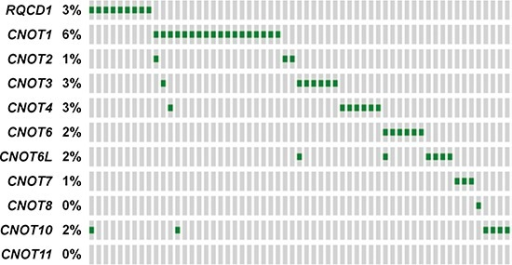 Mutational landscape of the CCR4-NOT complex genes in the TCGA databaseMutually exclusive pattern of CCR4-NOT complex gene members based on TCGA mutational data from the subcutaneous melanoma dataset (provisional). Each green rectangle represents the presence of at least one protein altering mutation. A grey rectangle indicates no mutations. The prevalence of a mutation in each gene is shown. Plot extracted from the cBioPortal for cancer genomics.