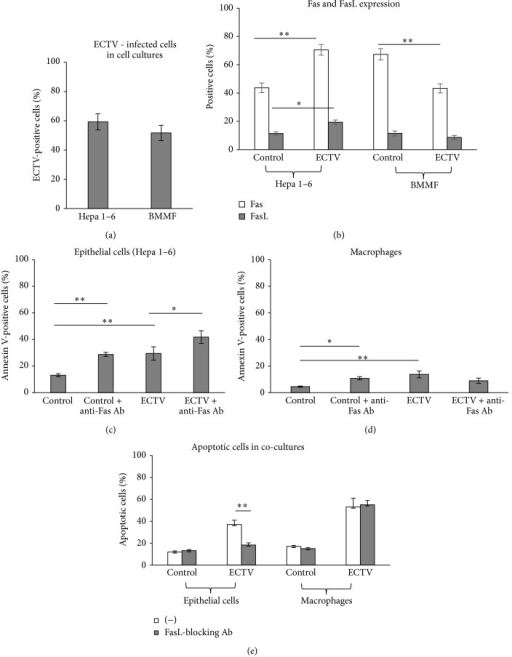 ECTV-infected macrophages and epithelial cells show different response to Fas-induced apoptosis. (a) Percentages of ECTV-infected cells in Hepa 1–6 epithelial cell cultures and bone marrow derived macrophages (BMMF) at 24 h p.i. (b) Percentage of Fas- and FasL-positive cells in epithelial Hepa 1–6 and BMMF cultures at 24 h of ECTV infection. Percentage of apoptotic (annexin V-positive) cells in epithelial Hepa 1–6 (c) and BMMF cultures (d), infected or not with ECTV and exposed or not to anti-Fas cytotoxic antibody (10 mg/mL). (e) Percentage of apoptotic cells in the cocultures of epithelial Hepa 1–6 and macrophage cells infected or not with ECTV and exposed to anti-FasL-blocking antibody (10 μg/mL). The bars represent the mean from 3 separate experiments (N = 3) ± SEM.  *Significant differences with P ≤ 0.05 and **P ≤ 0.01.