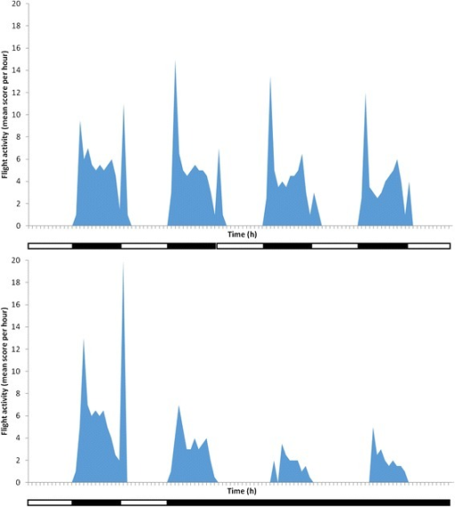 Circadian flight activity of inseminated non blood-fedAnopheles stephensiin an acoustic actograph under a 12:12 hour light/dark regime (top) and on transfer from a light/dark 12:12 hour to a constant darkness regime (bottom). Dark bars on x-axis refer to periods of darkness, white bars to periods of light. Hourly flight activity is a score (out of 60) indicating the number of minutes per hour during which mosquitoes undertook flight.