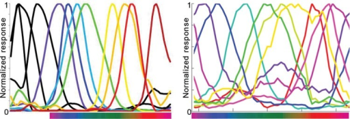 Color tuning of (A) mantis shrimp photoreceptors, and (B) of a few neurons in macaque inferior temporal cortex.