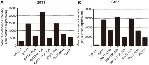 Cell surface expression of BST2 variants.293T and CrFK cells were co-transfected with 500 ng of VR1012, fBST2, fBST2 N79A, fBST2 N119A, fBST2 N79/119A, fBST2-IHA, fBST2-NHA or fBST2* expression plasmid, along with 500 ng of pEGFP-N3 as a transfection marker. After 48 h, cells were harvested and stained with the anti-fBST2 pAb and Alexa 633 goat anti-rabbit IgG, followed by flow cytometric analysis. Cells only transfected with pEGFP-N3 were used as a negative control. The samples were gated on EGFP+ cells, and the surface BST2 levels are shown in the column diagram with mean fluorescent intensity values (A and B). This experiment was repeated three times, and the most representative data are shown.