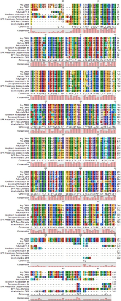 Multiple sequence alignment of dihydroflavanol 4-reductase, consensus sequences of different plant species (Rosa chinensis, Vaccinium macrocarpon, Gerbera hybrid, Petunia × hybrid, Ang. DFRI, Ang. DFRII, Gossypium hirsutum, Iris × hollandica, and Ampelopsis grossedentata) were achieved by using CLC Genomics Workbench 8. The colored bars at the bottom are representing the conservation Percentage.
